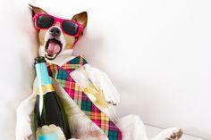 Kac, nazywany przez Chińczyków gadającym psem, to nic dobrego. Ból głowy, światłowstręt, nadwrażliwość na hałas, nieznośne nudności… Jak możesz sobie pomóc?