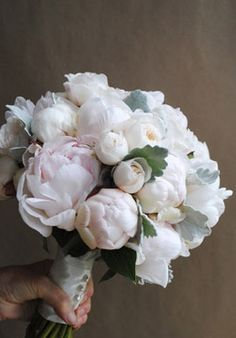 An Ode To Peonies