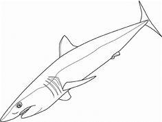 San jose sharks hockey at sharks pinterest sharks for San jose sharks coloring pages