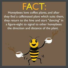 I think I was a honey bee 🐝 in my past life! I Love Bees, My Love, Bee Friendly, I Love Coffee, Coffee Coffee, Coffee Shop, Coffee Pics, Happy Coffee, Sweet Coffee