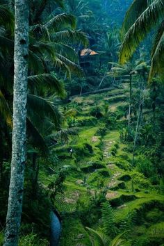 Honestly one of the most amazing thing - the rice terraces of Bali, Indonesia