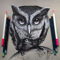 Meet Oliver the Owl! His galaxy eyes are a hoot. Spectacular artwork by @art_ofthe_endangered. #artistic_share