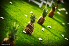 Pineapple Aisle  www.mikesidney.com    The Wedding Lady - Exquisite Wedding Planning in Maui Hawaii and Vancouver BC    #weddinglady.com