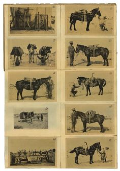 ANZAC Horses - Lest We Forget all the fallen diggers and horses that fought for Australia. Where would be without them…