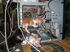 """Meet the New IT Department. """"I know that mouse is around here somewhere,"""""""