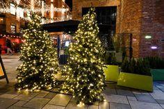 Julemagi i Oslo – Med koffert og kamera Oslo, Christmas Tree, Holiday Decor, Home Decor, Teal Christmas Tree, Decoration Home, Room Decor, Xmas Trees, Xmas Tree