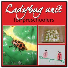Ladybug unit for preschoolers - Gift of Curiosity: I love the sensory bin in this post.