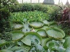 Tropical pond    From:  http://2.bp.blogspot.com/-SK3j-E23oGI/UCHBldGz1NI/AAAAAAAAAhQ/3KFC4rhQMiE/s320/osnabruck-botanical-gardens-10.jpg