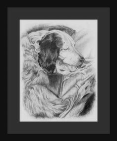 Frankie the #English #Setter ~ by artist Genevieve Schlueter. Come follow her at www.facebook.com/schlueter.art & visit www.gensart.net to learn how to have a piece done of your #furbaby