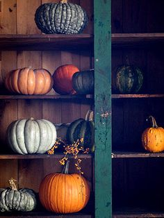 Shelves of pumpkins. gourds, and squash!.