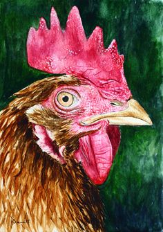 """""""Looking at you Chook"""" (watercolour - 28.5cm x 19.5cm (11"""" x 7.5""""))"""