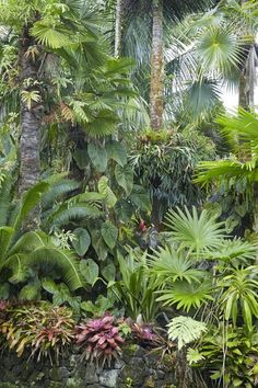 Tropical garden ideas, tips and photos. Inspiration for your tropical landscape . - Tropical garden ideas, tips and photos. Inspiration for your tropical landscape … -