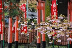 Canal et arbres de Kyoto (18)
