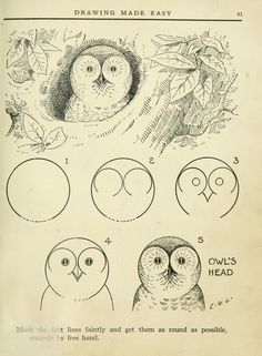 owl drawing diy