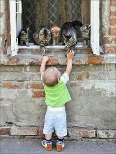 toddler making friends with stray cats in the window