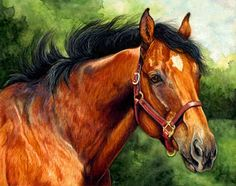 Bay Thoroughbred Stallion in Watercolor Pencil.  Horse and wildlife art by Mona Majorowicz.