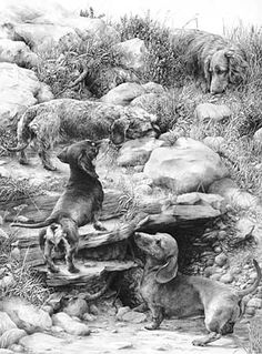 'The Warreners' Dachshund graphite pencil drawing by Mike Sibley