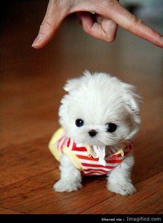 Poochie Pie ♥