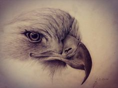#art#draw#eagle#pencil#realistic