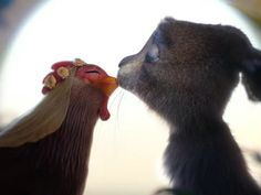 Easter Bunny was born from a chicken-bunny romance, ad says https://www.cnet.com/news/easter-bunny-viral-video-chicken-romance-german-commercial/?utm_campaign=crowdfire&utm_content=crowdfire&utm_medium=social&utm_source=pinterest