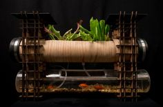 Solar powered aquaponics for apartments - looks rather complex and hard to clean out the fish tank part, but I love the idea!