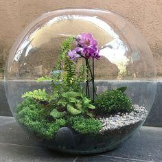 #giardinihaiku #naturedesign #naturelovers #tinygarden #junglebloggers #terrarium #horticultural #houseplantclub #horticulturaltherapy #greenart #homedecor #phalenopsis #orchids #minigarden #urbanjungle