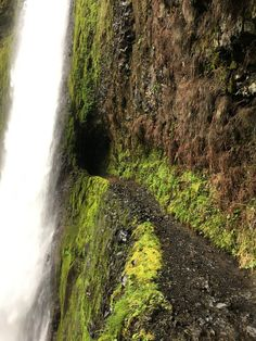 Solo hike on the Eagle Creek Trail to Tunnel Falls (Columbia River Gorge, Oregon) by Wendi Kali Oregon Road Trip, Oregon Travel, Oh The Places You'll Go, Places To Travel, Places To Visit, Tunnel Falls Oregon, Oregon Waterfalls, Columbia River Gorge, Camping World
