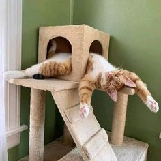 Looking for funny animals pictures? Well, here is the list of top funny animal pictures with captions to laugh at Cute Funny Animals, Funny Animal Pictures, Cute Baby Animals, Funny Cats, Humorous Animals, Cute Cats And Kittens, Cool Cats, Kittens Cutest, Pretty Cats
