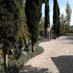 Private Client  Residence #estate #designs #landscape #outdoorart #gardenasart #artofliving #arts #botany #plantpalettes #sculpture #waterwisegardening #green #grow #mindfulness #conservation #consciousness #environment #drought #rain # cypress #agave #thuga # driveway #droughttolerantplants #plantpalettes #succulents #waterwisegardening #sustainable by merrileegardenartist #waterwise #waterwisegardening #drought #droughttolerant