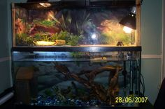Turtle Tanks Google Search I Love The Plants Over The