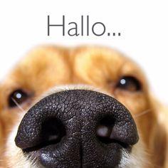 Grappige close up van een hond, verkrijgbaar bij #kaartje2go voor €1,99