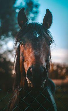 Horse, animal, eye and iphone wallpaper HD photo by Marko Blažević (@kerber) on Unsplash
