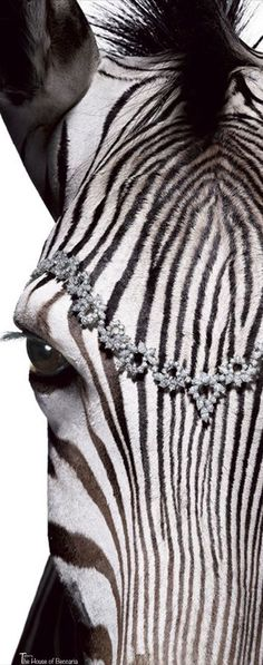 Diamonds and Zebras! These are a few of my favorite things!
