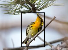 While there are already plenty of apps that help birdwatchers identify birds, most of them work by searching a database based on descriptions. The Merlin Bird Photo ID program, however, goes further – it utilizes computer vision tech to identify birds pictured in user-supplied photos.
