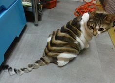 sliced cat (DANA try this with Pudge next time!)