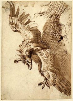 Frans Snyders, Flemish, 1579–1657, Study for Prometheus, 1612. Pen, brown ink, and brown wash on paper, 11 1/16 x 7 15/16 (28 x 20.2 cm. The British Museum, London. Donated by Count Antoine Seilern © The Trustees of the British Museum