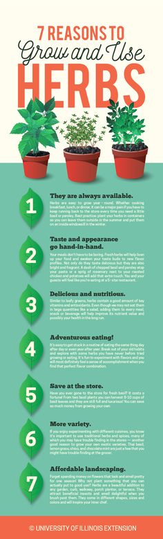 7 Reasons to Grow and Use Herbs #garden #kitchen