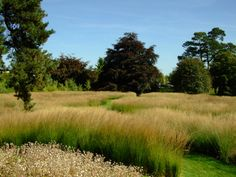 Trentham Gardens Piet Oudolfs Rivers of Grass