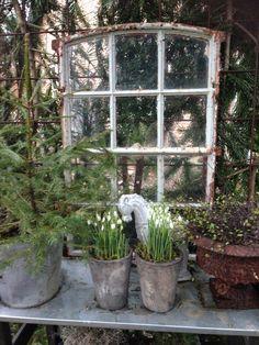 .Altes Fenster ... auch als Balkonverschönerung am Geländer...und somit Katzentauglich :-
