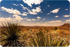 Terlingua Desert   Flickr - Photo Sharing!