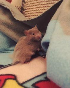 Meet Gandalf the Grey (aka Gandy). http://ift.tt/2n7lw8M