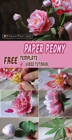 Free template and video tutorial to make paper peony flower, #paperflower #paperflower #flowertutorial #flowermaking