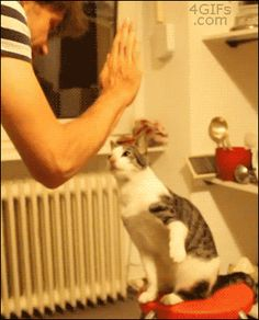 High fiving cats - gif set - Imgur