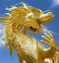 Gorgeous golden Chinese dragon or lung.
