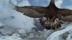 Titlestars, Bionics, Claw (Animal), Golden Eagle, Spread Wings, Wing (Animal), Dolomites, Pride (Emotion), Majestic, Flying (Flight), World Natural Heritage, Italy, Snow, Wilderness, Cloudy, Mountains, Wild Animal (Animals in the Wild), Day, Stock Footage,