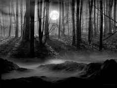 Dark and Magical Forest, Aberdeenshire, Scotland photo via picture
