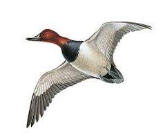 Bildergebnis für birds feet flight