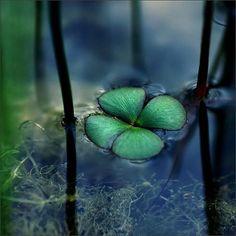 Floating clover