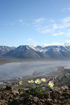 Summer in Svalbard, Norway. Svalbard is near the north pole. Beautiful Norway, Beautiful World, Cool Places To Visit, Great Places, Svalbard Reindeer, Norway Sweden Finland, Land Of Midnight Sun, Svalbard Norway, Norway Viking