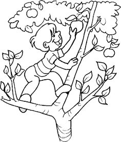 find this pin and more on orman haftas boy climbing an apple tree boy color page